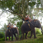 Elephant-Ride-resize